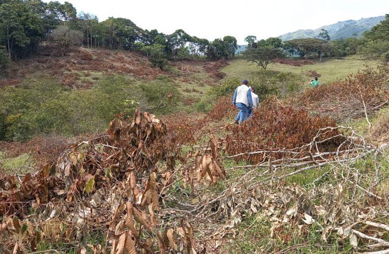 La Cárder detuvo enorme daño de deforestación en zona rural de La Virginia