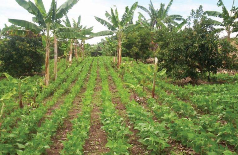 Cárder le apuesta a la agricultura de conservación en Risaralda